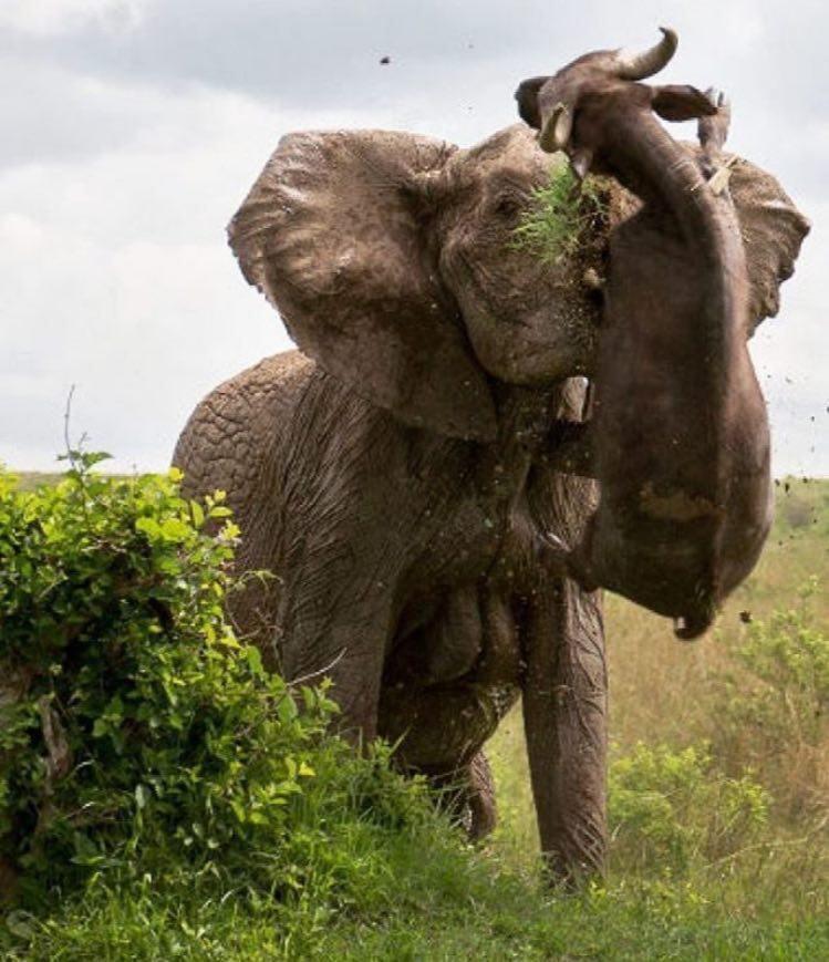 تصاویری باورنکردنی از عصبانیت فیل