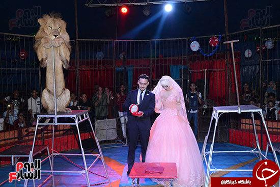 جشن نامزدی در سیرک