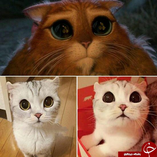 عکس دیده نشده از گربه شِرک