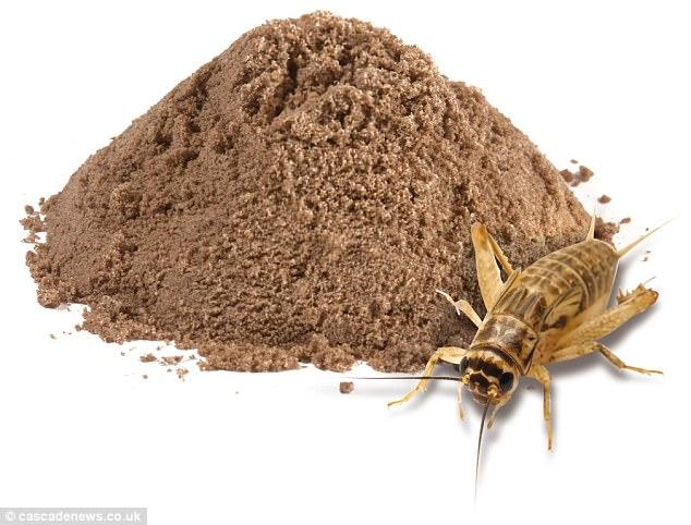 تهیه خوراکی های مختلف با حشرات