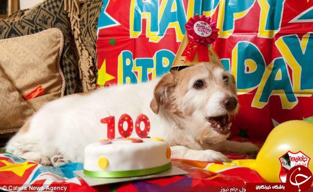 جشن تولد سگ خانگی توسط بچه پولدارها