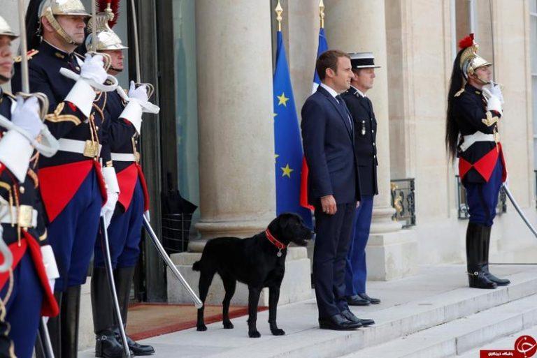 عکس دیده نشده از سگ رئیسجمهور فرانسه