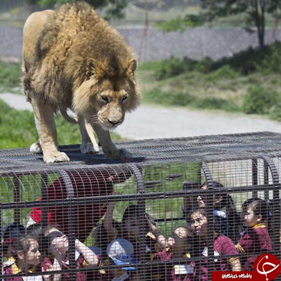 بازدید از باغ وحش در قفس