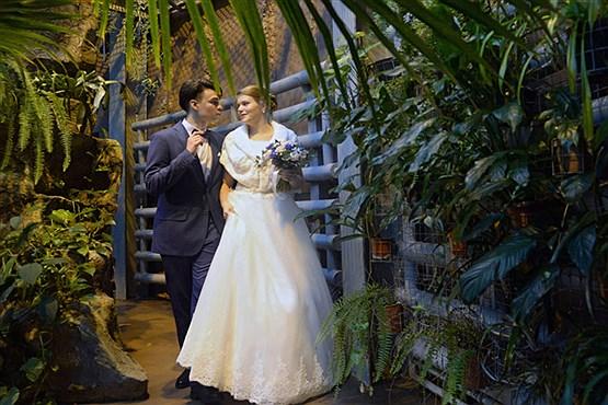 حضور عروس و داماد در محل نگهداری حیوانات