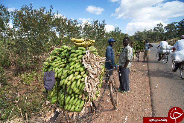پیدا شدن خونآشام در مالاوی
