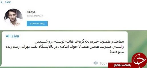 واکنش مجری تلویزیون به مرگ گربه هانیه توسلی