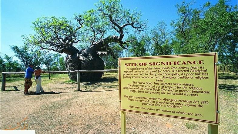 درختان جالب توخالی در استرالیا