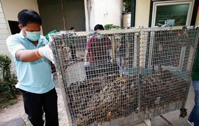 حمله مارها به مردم تایلندی
