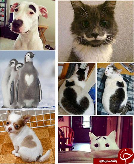شکل های جالب روی پوست حیوانات