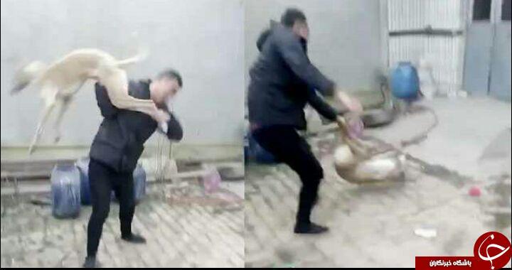 حمله مرد وحشی به سگ تازی