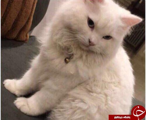 هدیه گرانقیمت زن عربستانی برای گربه گمشده