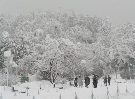 آمار کشته شدگان در برف