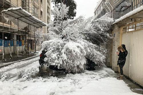 عکس درختان شکسته در برف,عکس درختان شکسته تهران بخاطر برف,درختان شکسته در برف