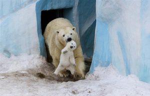 ده دانستی شگفت انگیز درباره قطب شمال