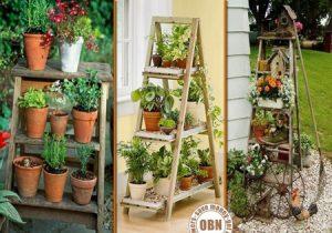 چطور از گیاهان در دکوراسیون خانه استفاده کنیم
