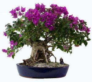 بهترین و زیباترین گل های طبیعی برای آپارتمان
