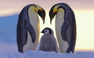 10 حیوان از وفادارترین حیوانات جهان + عکس
