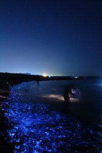 ساحل خلیج تویاما شب ها شگفت انگیز میشود