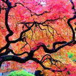 عکس های زیباترین و جالب ترین درخت های جهان