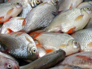 لیست قیمت انواع ماهی,قیمت ماهی تیر 97,جدول قیمت انواع ماهی 97